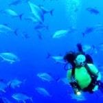 צלילה באיים האזוריים