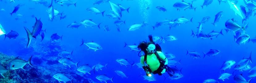 צלילה בקורבו