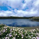 פלורס הוא גם – האי הורוד