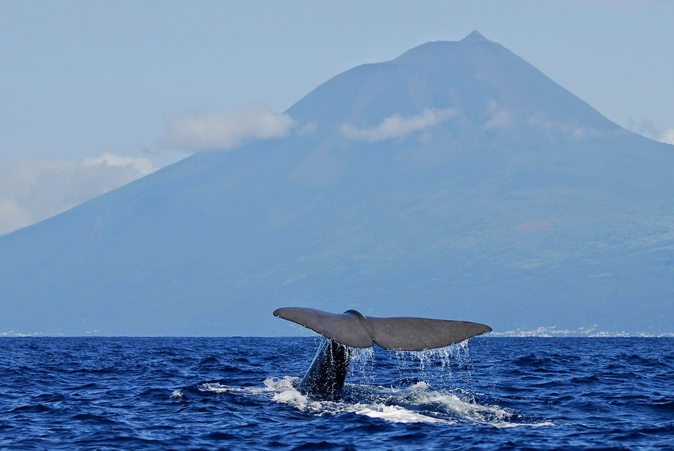 צפייה בלוויתנים