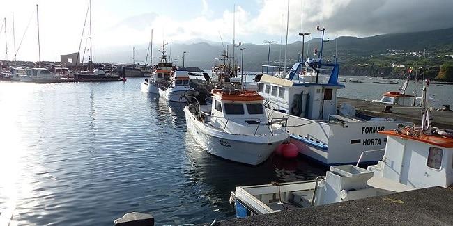 סירות בנמל של פיקו
